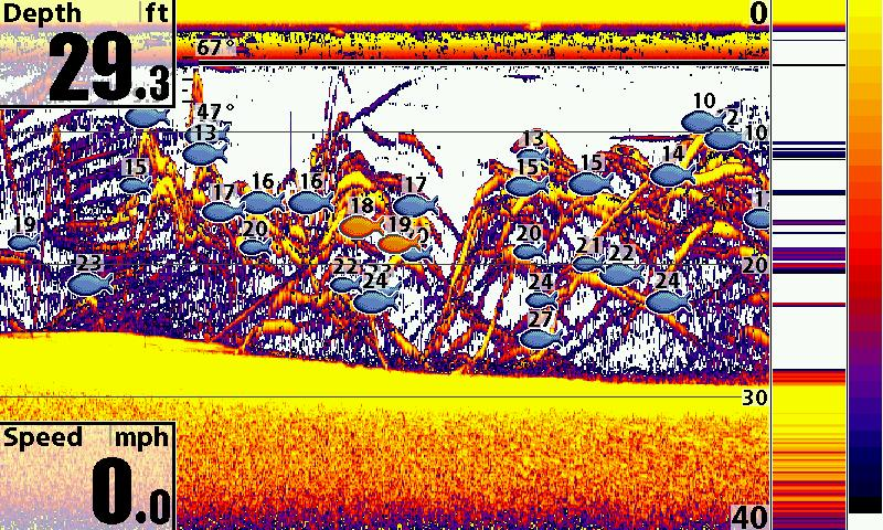sonar tips: how to use fish id to catch more fish » sonar wars, Fish Finder