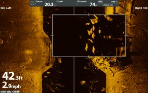 MEGA Imaging - Fish